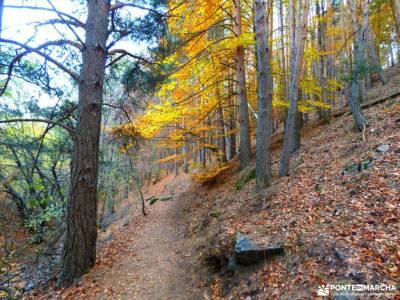 Hayedo Tejera Negra; parque natural del monasterio de piedra senderismo picos de europa; piraguas du